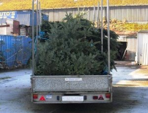 Christmas Tree Delivery service in Cork