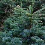 apartment Christmas tree