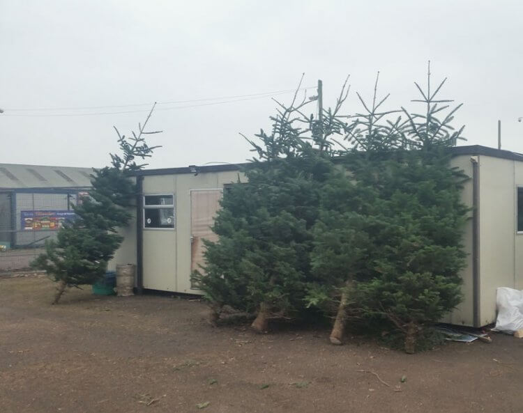 large outdoor trees