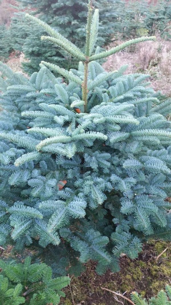 small 4ft christmas trees