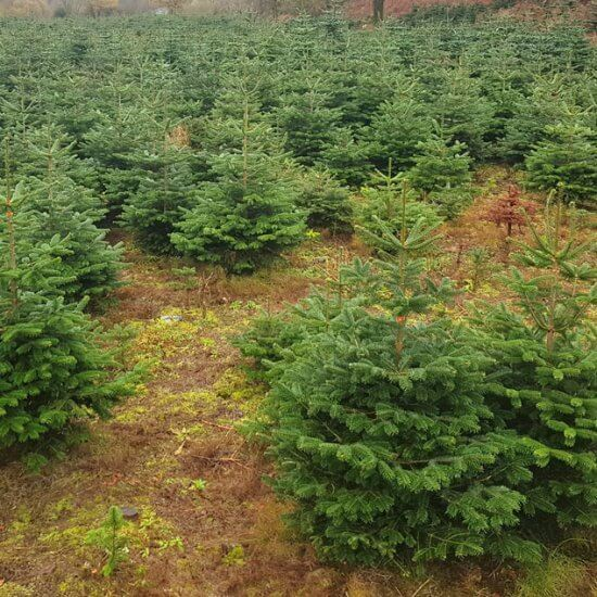 small 5ft Christmas Trees