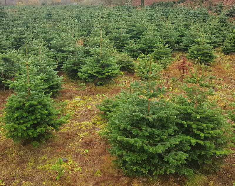Christmas Trees For Small Apartments.Small 4 5 Ft Tree