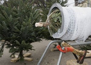 Christmas Tree Wrapping