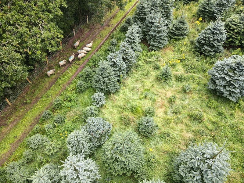 cork christmas tree farm
