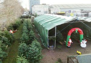 real christmas trees for sale