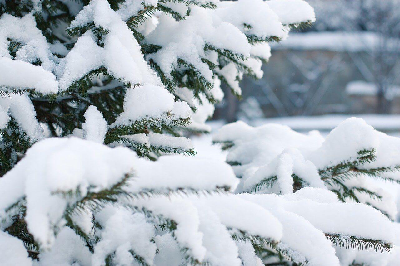 history of christmas trees